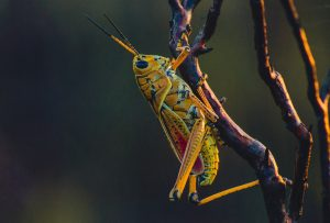 Insects with Custer State Park